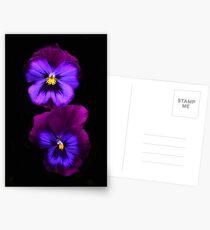 Lila Stiefmütterchen Postkarten