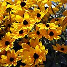 Yellow Flowers by Johnny Furlotte