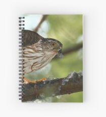 Sharp-shinned Hawk Spiral Notebook