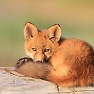 A Little Tired (Fox Kit) by akaurora