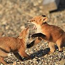 Play Time 2 (Fox Kits) by akaurora