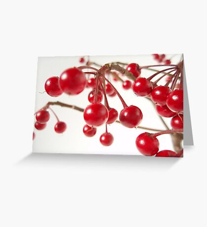 Ardisia Crenata Evergreen Shrub With Red Berries Greeting Card