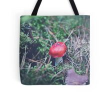 red mushroom in the forest