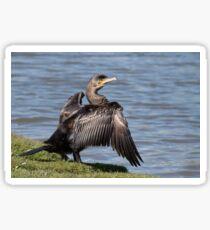 Great Cormorant Sticker