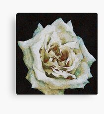 A Romantic White Wedding Rose Canvas Print