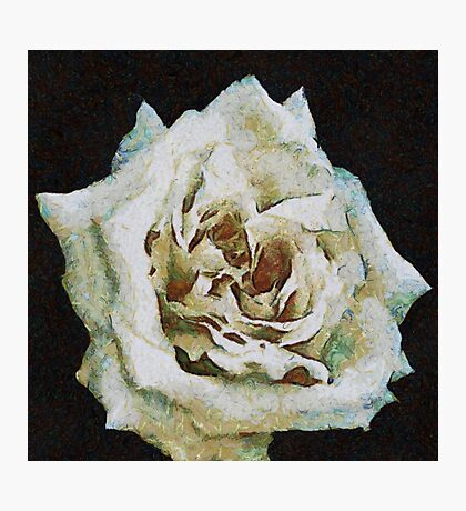 A Romantic White Wedding Rose Photographic Print