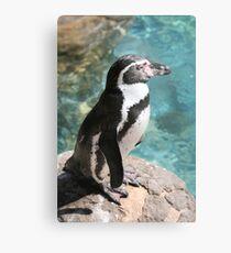 Humbolt Penguin 2663 Metal Print