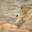 lion cub by BlaizerB