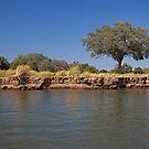 Zim tree by BlaizerB