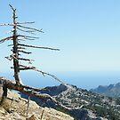 Solitary tree by Talida Pacurar