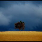 Dark Clouds over the Apple Tree.......... by Imi Koetz