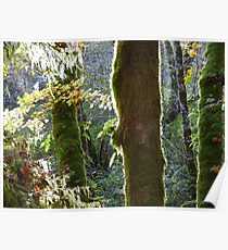 Sunglow in the Rainforest Poster