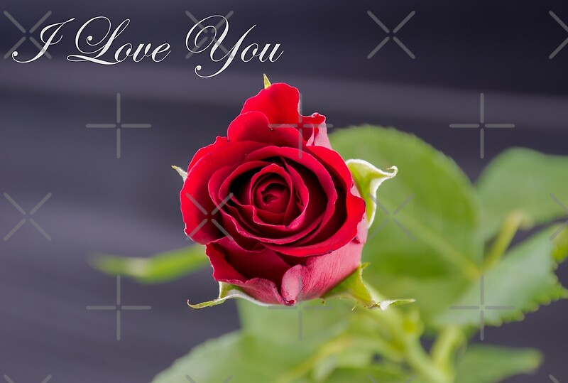 """""""Red Rose - I Love You"""" by Russell102   Redbubble"""