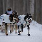 #3 Ceremonial Iditarod Start  ~ The Athletes  by akaurora