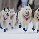 #2 Ceremonial Iditarod Start ~ The Athletes  by akaurora