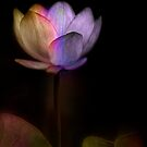 Magic Water Lily by Dianne English