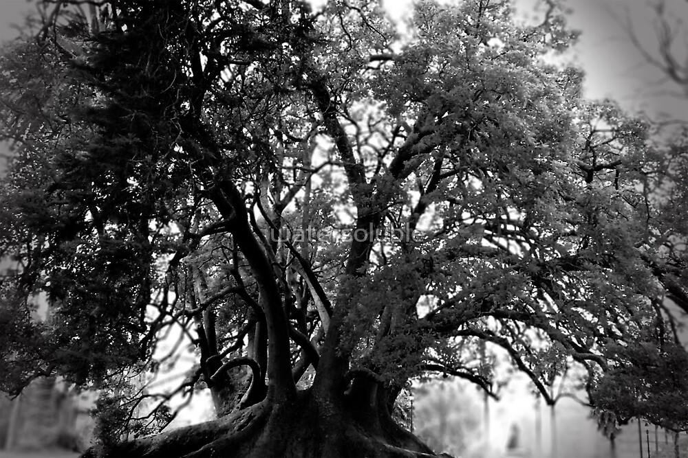all hallows tree by dennis william gaylor