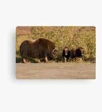 I Said, No Playing In The Road!! Canvas Print