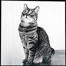 Tasha in black and white by jodi payne