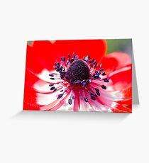 anemone coronaria in the garden Greeting Card