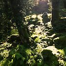 Burrator Wood, Dartmoor by Barnaby Edwards