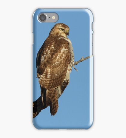 Red-tailed Hawk - juvenile iPhone Case/Skin