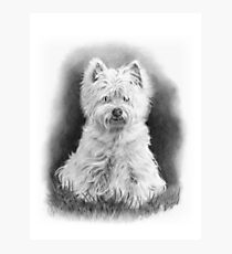 West Highland White Terrier, Westie Dog, Pencil Drawing Photographic Print