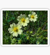 Canadian Dwarf Cinquefoil Sticker