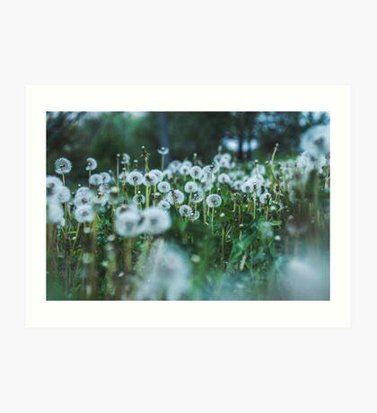 dusky dandelions Art Print