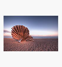 Scallop Sculpture Photographic Print
