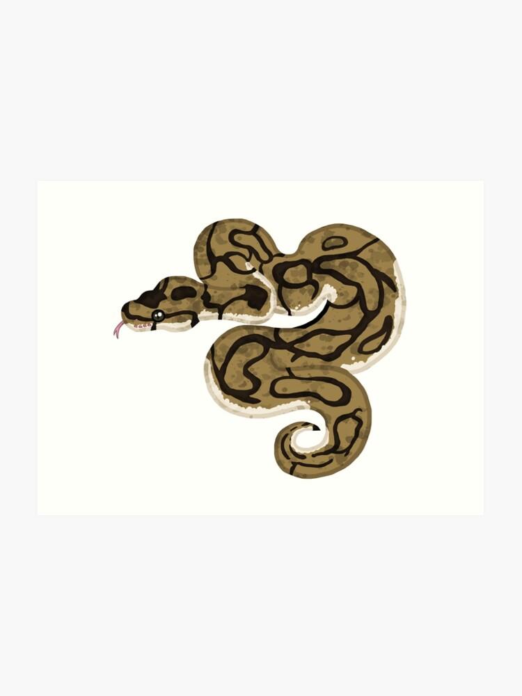 Ball/Royal Python - Spider Morph | Art Print