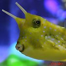 cow fish 2 by Jenifer