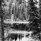 Denali - Reflections in a Pond BW by mcstory
