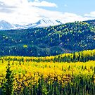 Denali - Golden Valley by Mary Carol Story