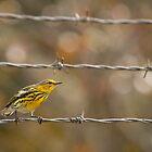 Prairie Warbler by Amy Jackson