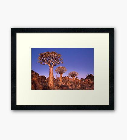 Dusk in the Quiver Tree Forest Framed Print