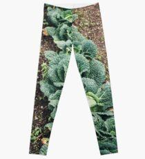 Cabbage Row Leggings