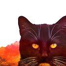 Wrath of Cat by katmakesthings