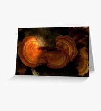 Fungi along the Gondwana Rainforest walk Greeting Card