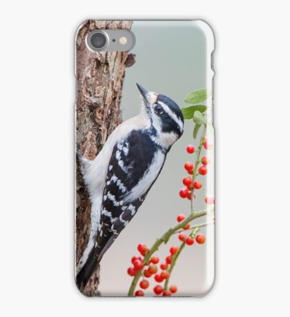 Downy Woodpecker with Berries in Background iPhone Case/Skin