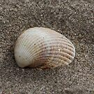 A Lone Shell by AnnDixon