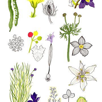 Herbarium / Herbier #3 by roxanneb