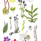Herbarium / Herbier #2 by Roxanne Bee