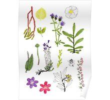 Herbarium / Herbier #2 Poster