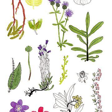 Herbarium / Herbier #2 by roxanneb