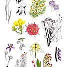 Herbarium / Herbier #1 by Roxanne Bee