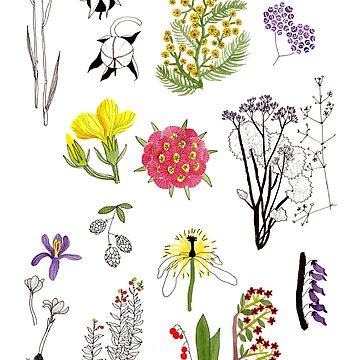 Herbarium / Herbier #1 by roxanneb