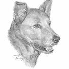 red dog drawing by Mike Theuer