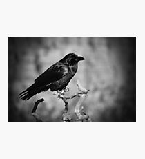Whispering Wind Photographic Print