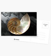 Chambered Nautilus Postcards